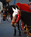 Carriage horse with crochet ear protectors Stock Image