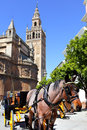 Carriage horse near cathedral seville Stock Images