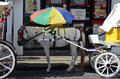 Carriage horse and umbrella grey on hot day with parasol attached to harness to keep cool Royalty Free Stock Photo