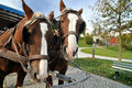 Carriage horses on the Herrenchiemsee island Royalty Free Stock Photo