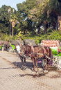 Carriage in marrakech morocco surrounded by trees and palms is an image vertical on a sunny day Stock Photos