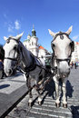 Carriage and pair Royalty Free Stock Photography