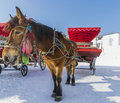 Carriage Winter Moon Lake Play...