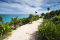The carribean sea beautiful view of from nation park of tulum Stock Photography