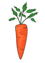 Carrot drawing of an isolated Royalty Free Stock Photo