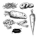 Carrot hand drawn vector illustration set. Isolated Vegetable engraved style