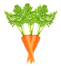 Carrot isolated on white background Royalty Free Stock Images