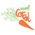 Carrot with leaves and text sweet carrot on the white background close up root vegetable qualitative vector illustration for Stock Images