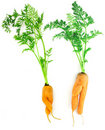 Carrots as a boy and girl Royalty Free Stock Photos