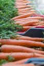 Carrots in box group of seen from vertical the market Royalty Free Stock Image