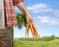 Carrots in farmer hand selective focus Royalty Free Stock Photography