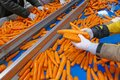 Carrots in food processing plant Royalty Free Stock Photo