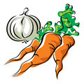 Carrots and garlic Stock Photography