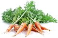 Carrots with leaves Stock Image