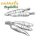 Carrots vegetable set hand drawn vector illustration realistic sketch