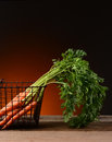 Carrots in wire basket with warm background fresh picked a a light to dark the carrot tops hang over the edge on to the Royalty Free Stock Photography