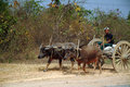 Cart being pulled by buffalo mandalay myanmar march unidentified farmer riding on their carrying supplies the highway runs along Royalty Free Stock Photography