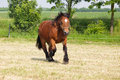 Cart horse on the paddock Royalty Free Stock Photo