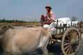 Cart were drawn by oxen mandalay myanmar march unidentified farmer riding on their bull carrying supplies the highway runs along Stock Photo