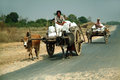Cart were drawn by oxen mandalay myanmar march unidentified farmer riding on their bull carrying supplies the highway runs along Royalty Free Stock Image