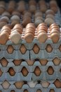 Cartons Of Eggs Royalty Free Stock Photos