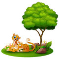Cartoon adult cheetah with cub cheetah under a tree on a white background