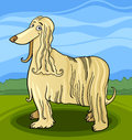 Cartoon afghan hound dog Stock Images