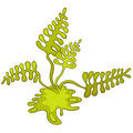 Cartoon Alga Royalty Free Stock Image