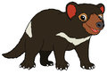 Cartoon Animal - Tasmanian Dev...