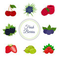 Cartoon berries menu. Raspberry, blackberry, gooseberry, red currant, black currant