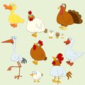 Cartoon bird set of domestic birds for web design Royalty Free Stock Image