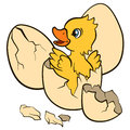 Cartoon birds for kids. Little cute duckling hatchet from egg. Royalty Free Stock Photo