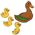 Cartoon birds for kids. Mother duck swims with her ducklings Royalty Free Stock Photo