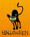 Cartoon black cat halloween illustration on orange background Stock Photo