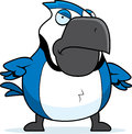 Cartoon blue jay angry a with an expression Royalty Free Stock Photos