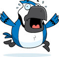 Cartoon blue jay panic a running in a Stock Photography