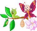 Cartoon butterfly metamorphosis illustration of Royalty Free Stock Photos