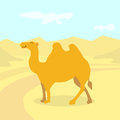 Cartoon Camel Desert Colorful Flat Retro Royalty Free Stock Photo