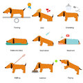 Cartoon Caring for Dog Set. Vector
