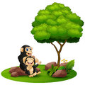 Cartoon chimpanzee mother hug her baby chimp under a tree on a white background Royalty Free Stock Photo