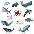 Cartoon Colorful Underwater Animals Set
