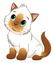 Cartoon colorpoint kitten Royalty Free Stock Photo
