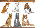 Cartoon comic illustration canine breeds purebred dogs set Royalty Free Stock Image