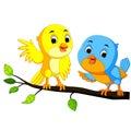 Cartoon couple bird on a branch