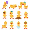Cartoon cute ducks. Little baby yellow chick vector isolated characters