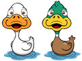 Cartoon duck vector illustration of Stock Image