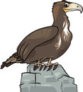 Cartoon eagle wild bird Royalty Free Stock Photo