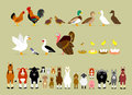 Cartoon farm characters part cute animal including birds hen rooster brown quails mallard ducks domestic ducks goose pigeon Stock Image