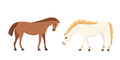 Cartoon farm isolated vector hoses. Collection of animal horse standing . Different silhouette