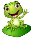 Cartoon frog sitting on the leaf Royalty Free Stock Photo